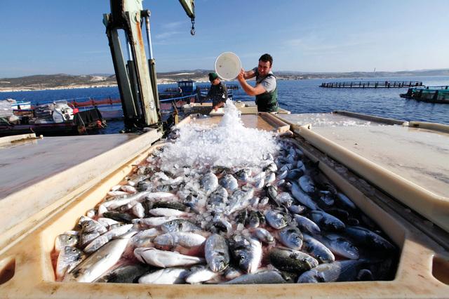 صيد السمك في مصر